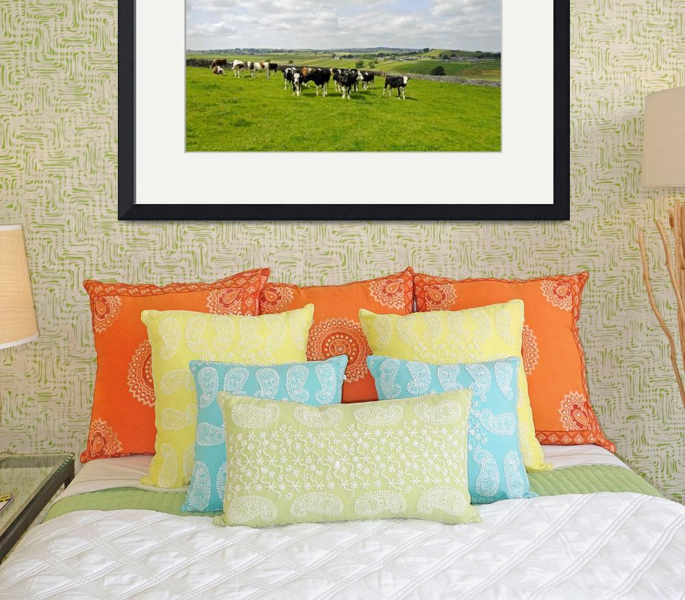 """Herd of Bull Calves near Litton (29404-RDA)&quot  (2011) by rodjohnson"