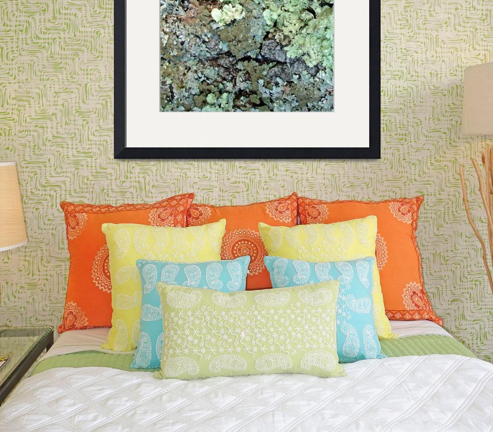 """""""Lichen Painting&quot  (2009) by LyndaLehmann"""
