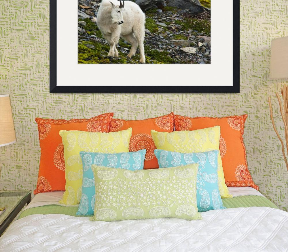 """Young Mountain Goat Billy Is Grazing On Plants, Al&quot  by DesignPics"
