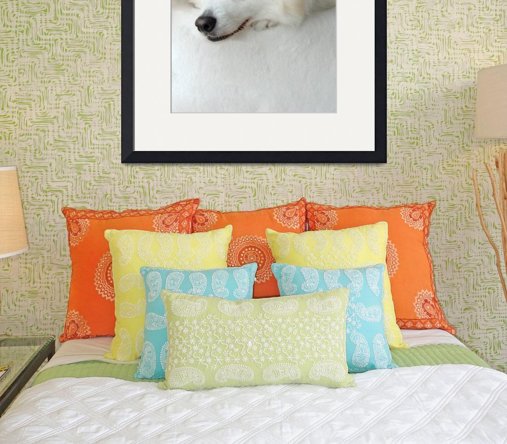 """""""Portrait of Snowball&quot  (2009) by BlueSwan"""
