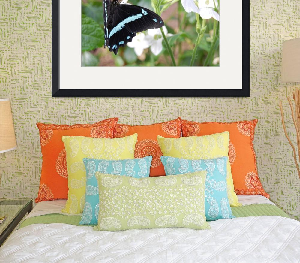 """Turquoise/Black Butterfly -The Butterfly Place - W&quot  (2009) by kerriemckennajames"