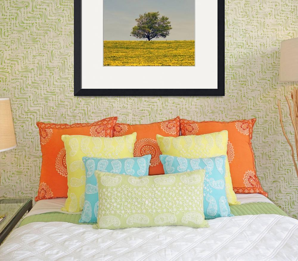 """Maple Tree And Dandelion Field, Prince Edward Isla&quot  by DesignPics"