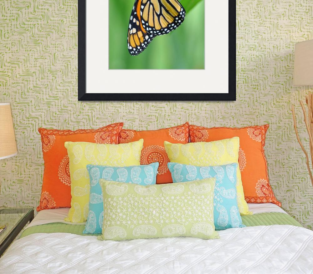 """Monarch & Milkweed No3&quot  (2009) by evansonart"