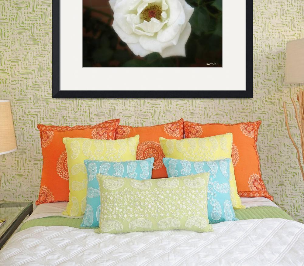 """""""Very White Roses 3&quot  (2010) by ChristopherInMexico"""