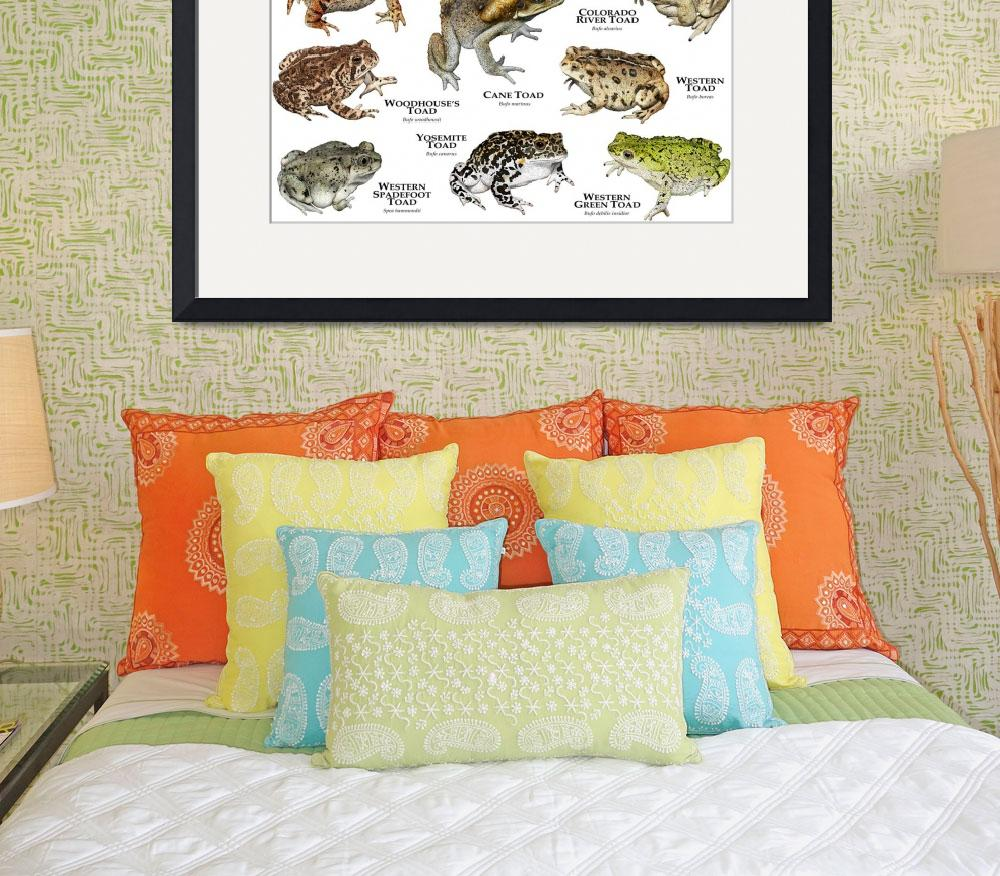 """""""Toads of North America&quot  by inkart"""