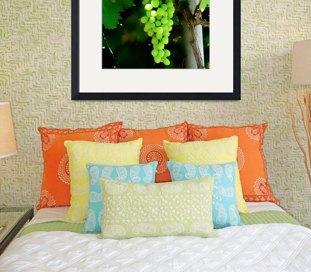 """""""Grapes on the vine&quot  (2014) by rottlig"""
