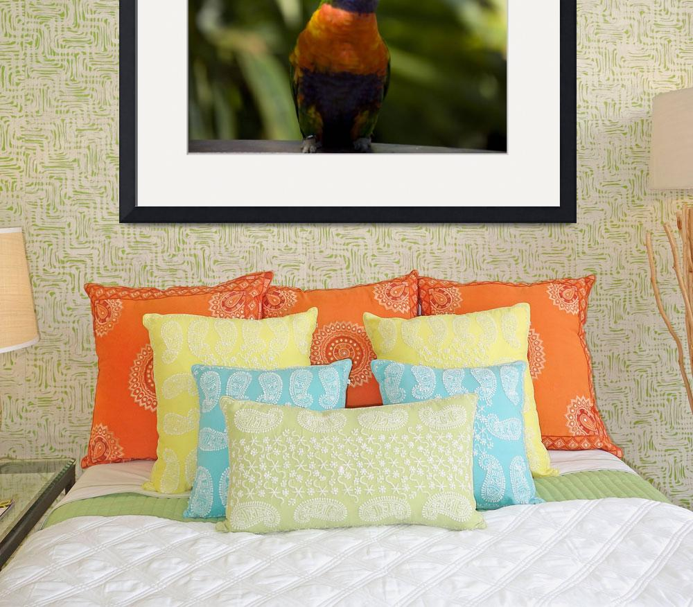 """Rainbow Lorikeet&quot  (2009) by ValeriesGallery"