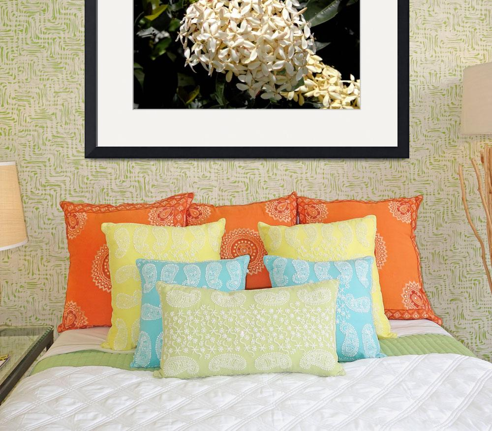 """Cayman Islands Plant Life: White Ixora&quot  by RonScott"