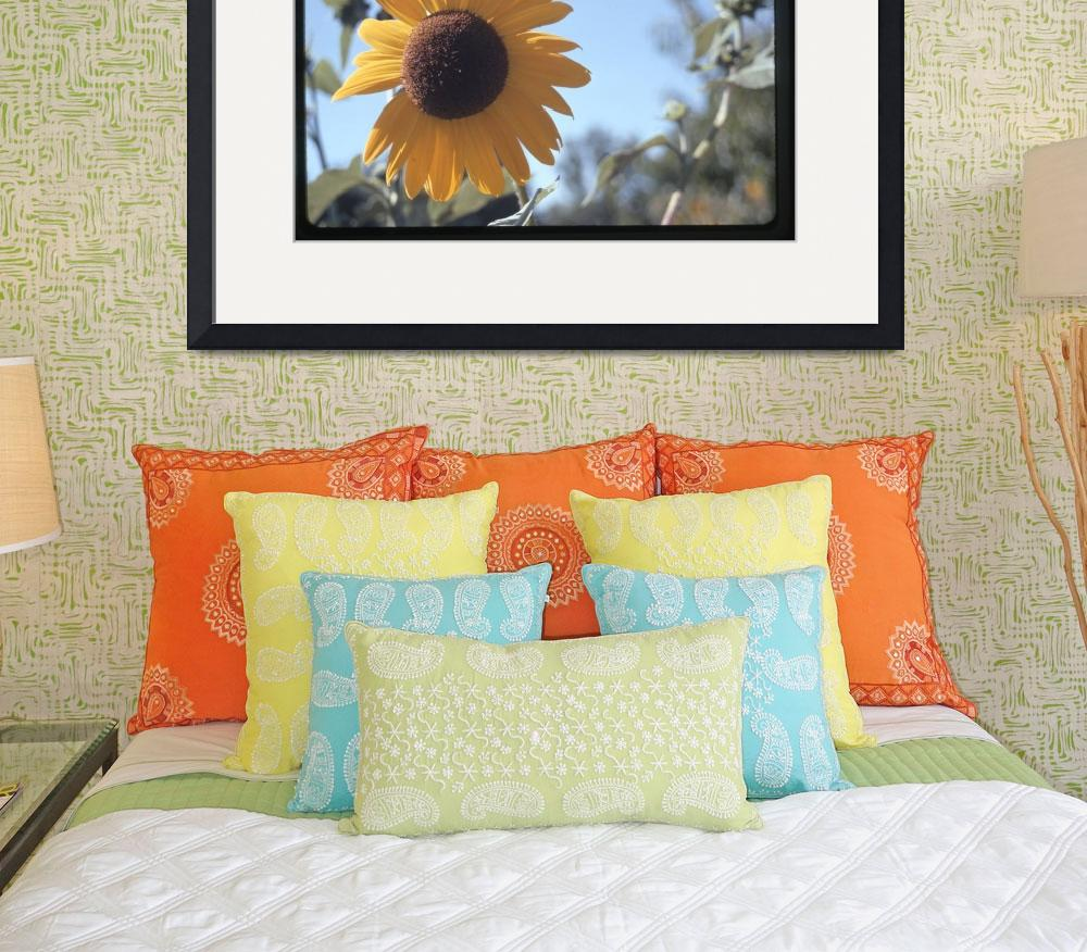 """""""sunflower&quot  (2009) by oldawnie"""