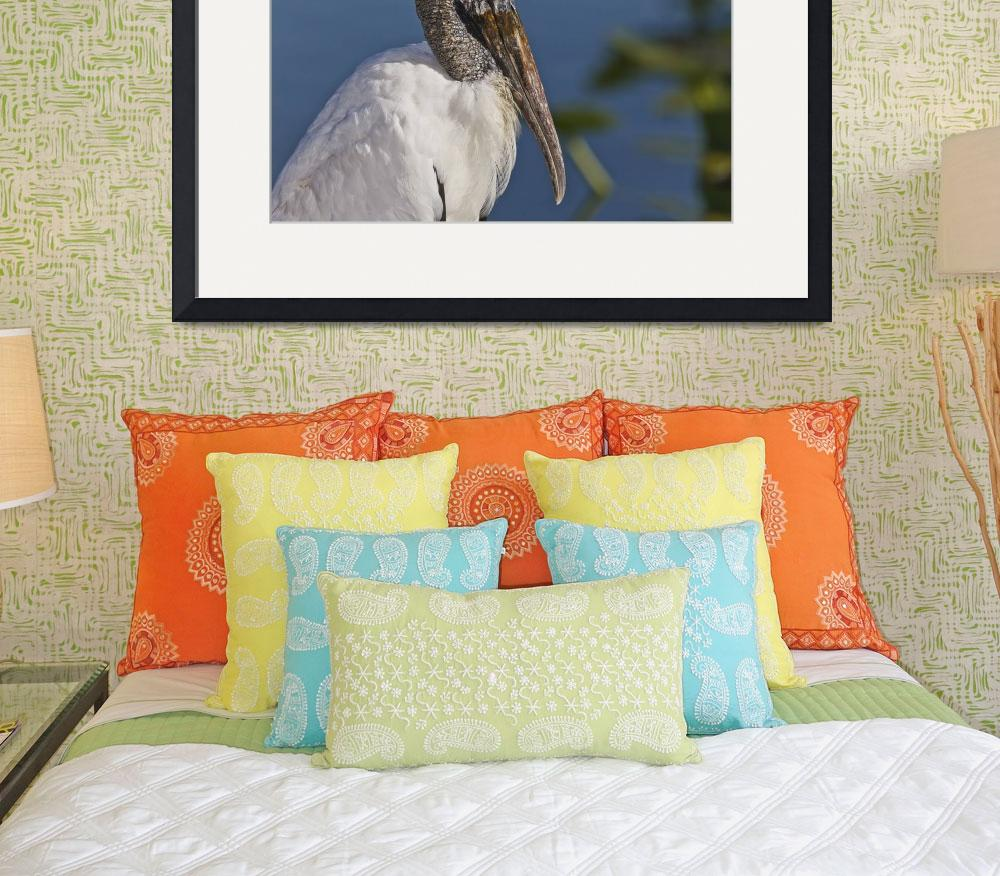 """Wood Stork&quot  (2011) by shutterbugdan"