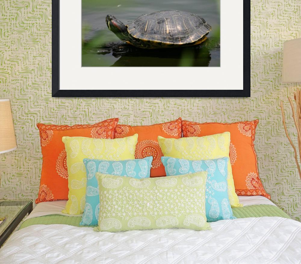"""""""Red Earred Slider Turtle&quot  by pristinephoto"""