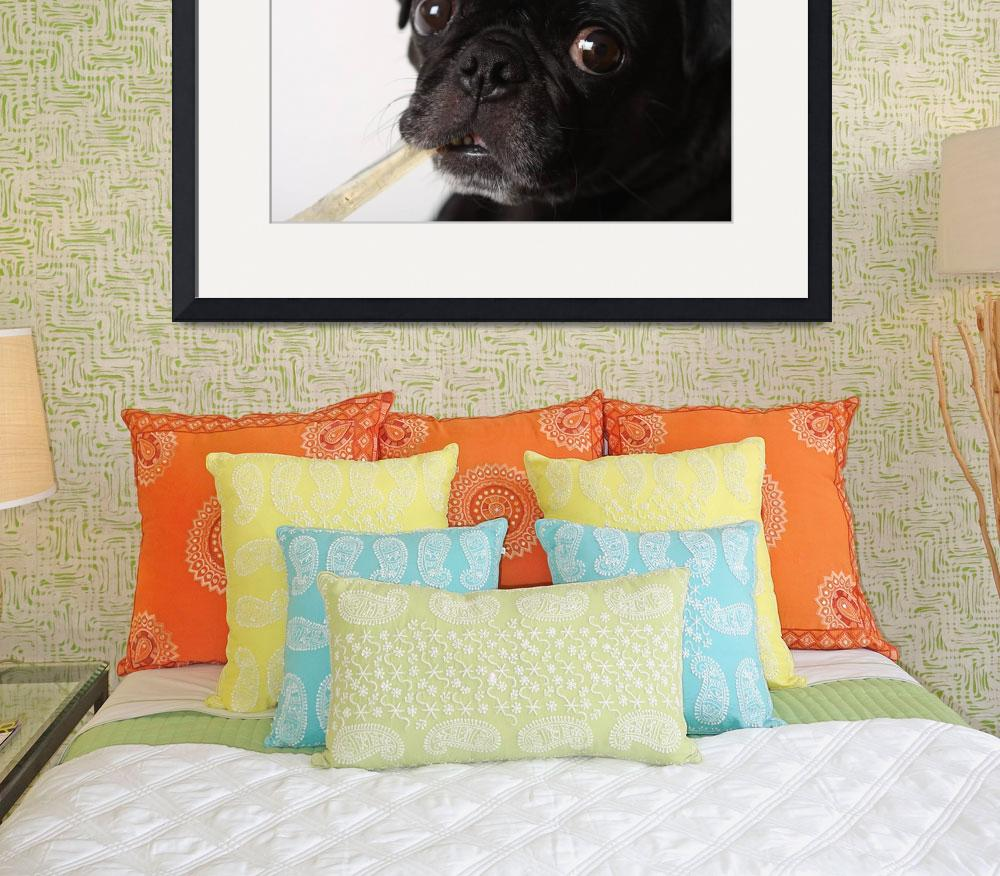 """Black Pug with Bone&quot  (2008) by melissashouse"