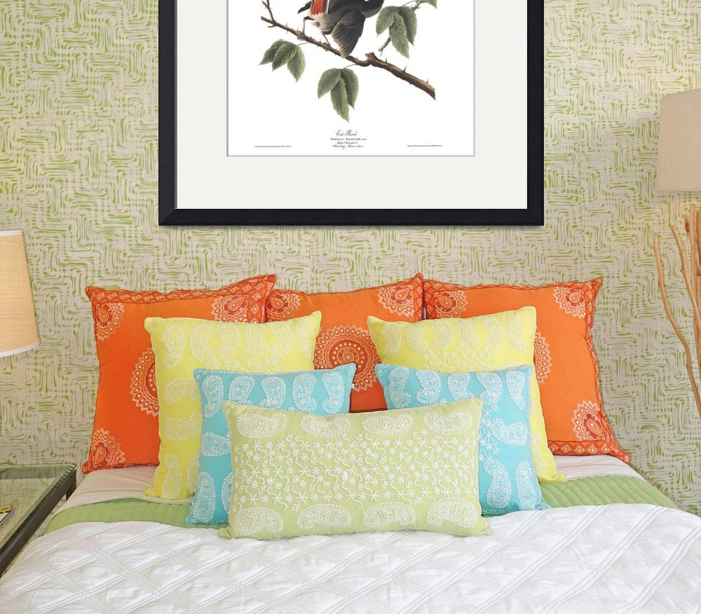 """Audubon plate 128 Cat Bird&quot  by FineArtClassics"