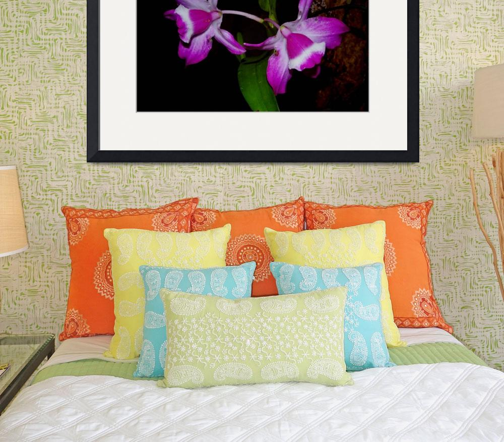 """""""Purple orchid of Colombia&quot  (2016) by DanSteeves"""