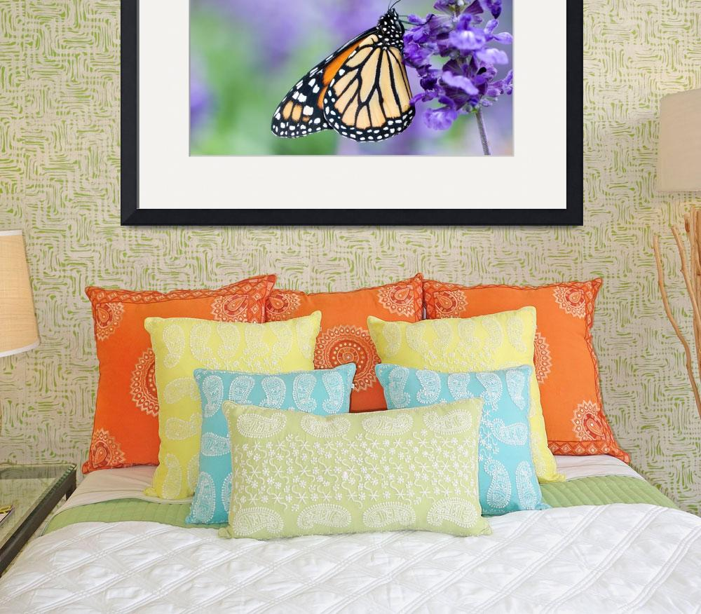 """Monarch Butterfly and Purple Flowers&quot  by OGphoto"