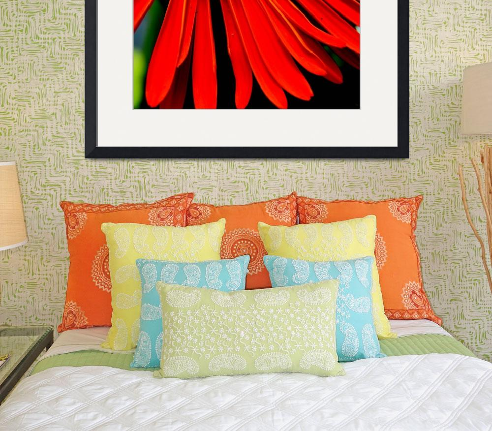 """""""Red Gerbera""""  (2009) by csquared"""