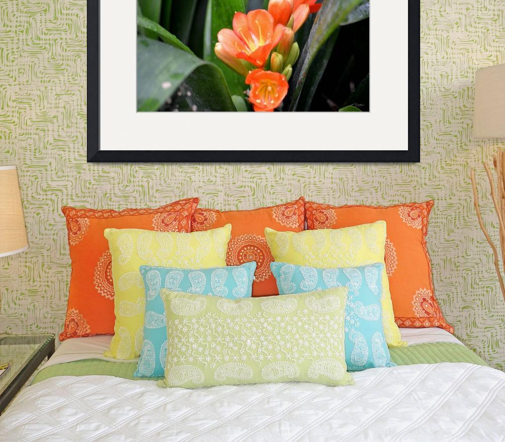 """""""More Clivia opening&quot  (2012) by rderder"""