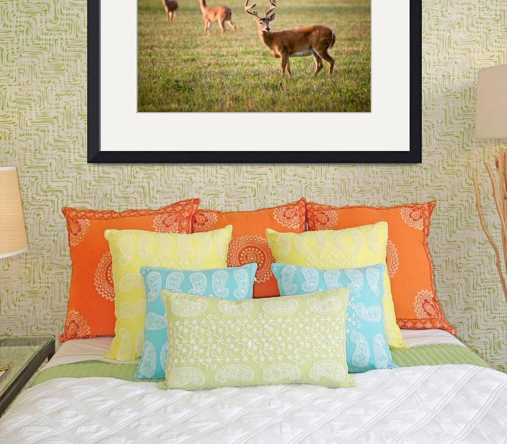 """""""White Tailed Deer Wildlife Photography Nature&quot  (2010) by DAPhoto"""