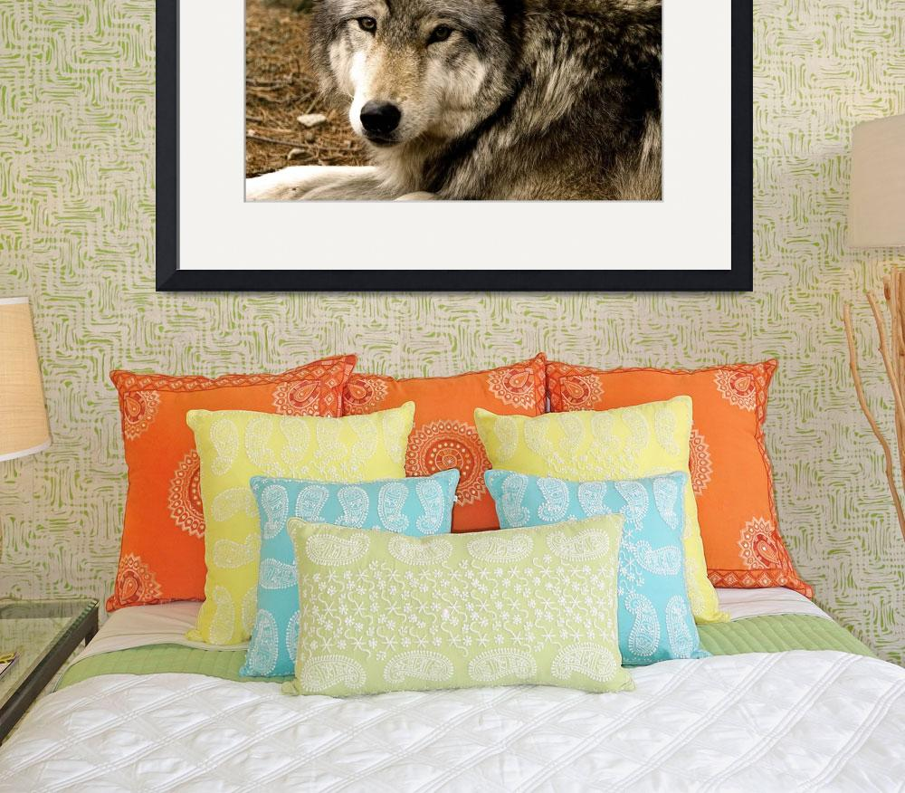"""""""Timber Wolf 1630""""  (2009) by buffaloworks"""