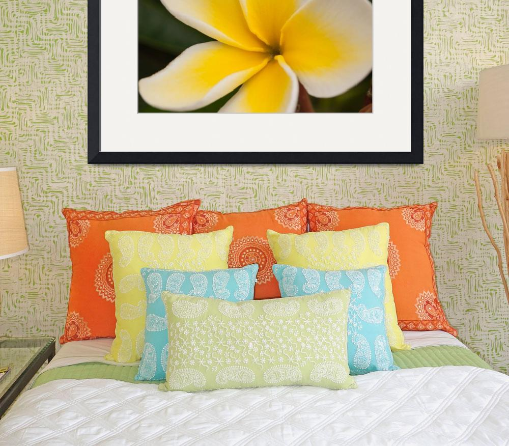 """""""Plumeria Closeup-1790""""  (2004) by AmbientCreations"""
