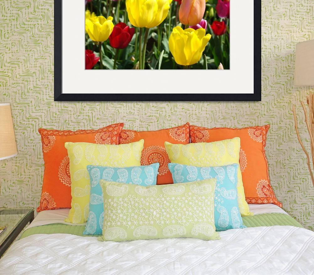 """Colorful Tulip Flowers Meadow Field art prints&quot  (2011) by BasleeTroutman"