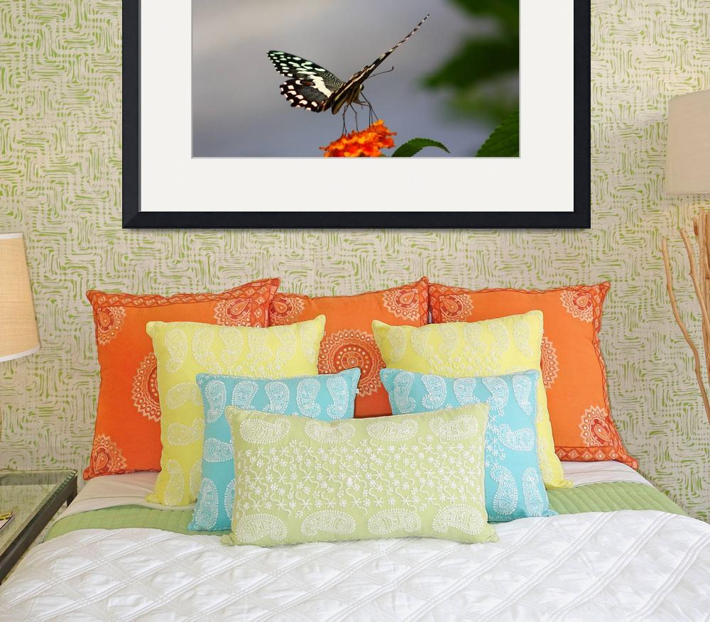 """""""Lime Swallowtail&quot  (2008) by jdmphotography1"""