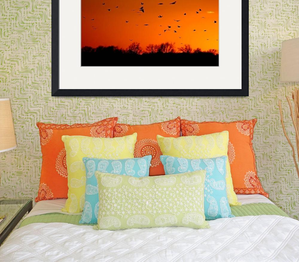 """""""SUNSET BIRDS&quot  by tmckinleyphotography"""