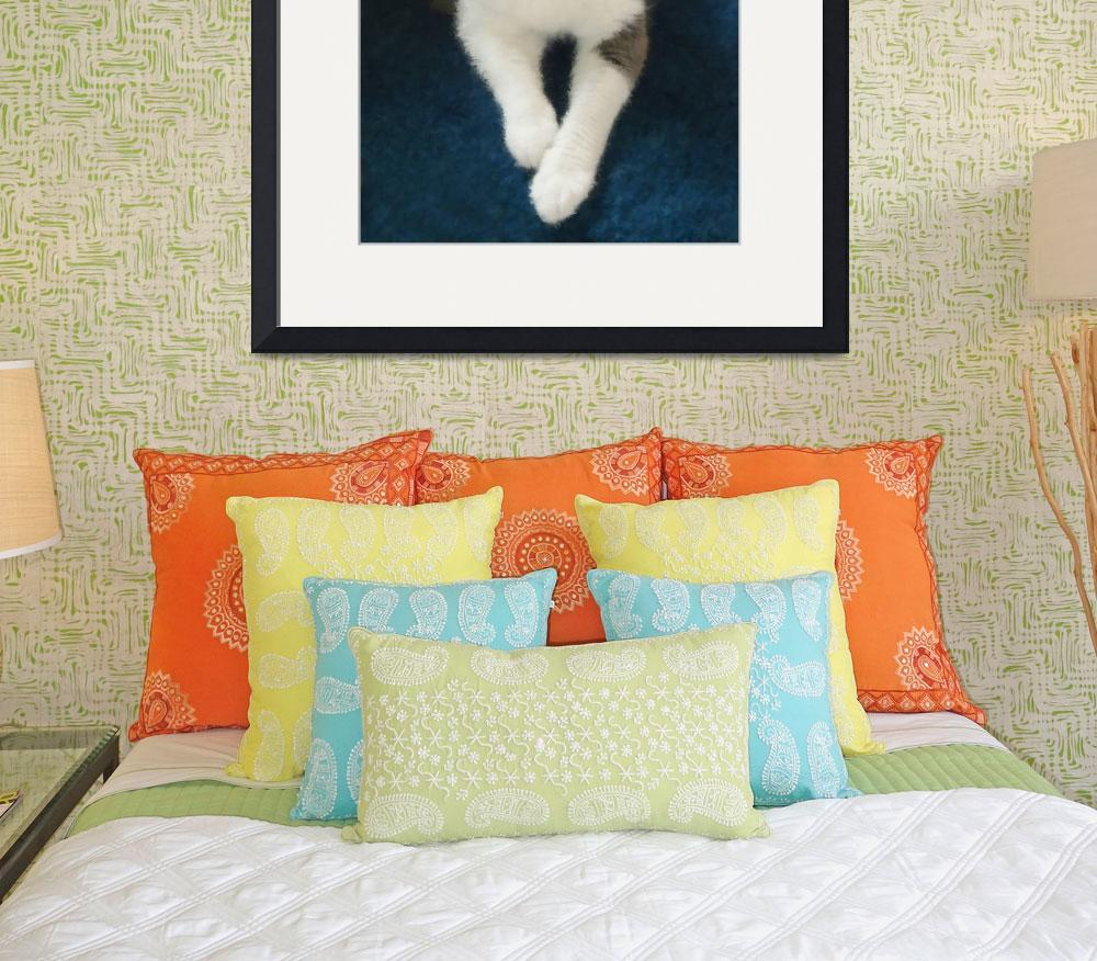 """""""COMFY CAT&quot  (2011) by shaynaphotography"""
