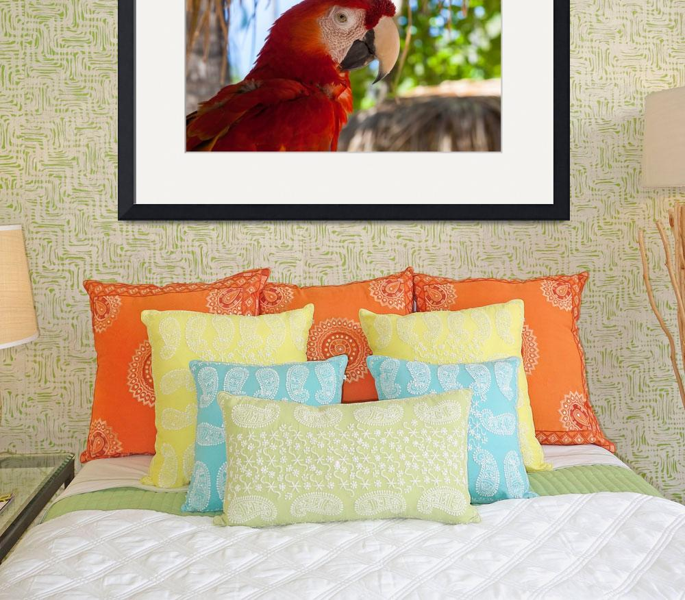 """""""Scarlet Macaw profile&quot  (2012) by puravidaviews"""
