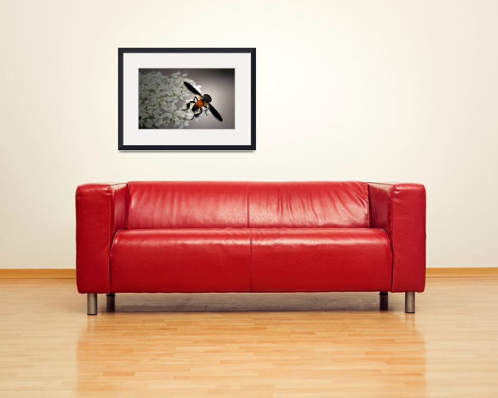 """""""Feather Legs""""  (2011) by meadowhawk"""