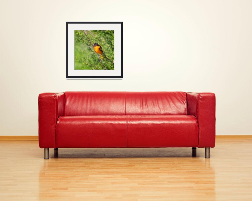 """""""Baltimore Oriole Bird Square format&quot  (2014) by KsWorldArt"""