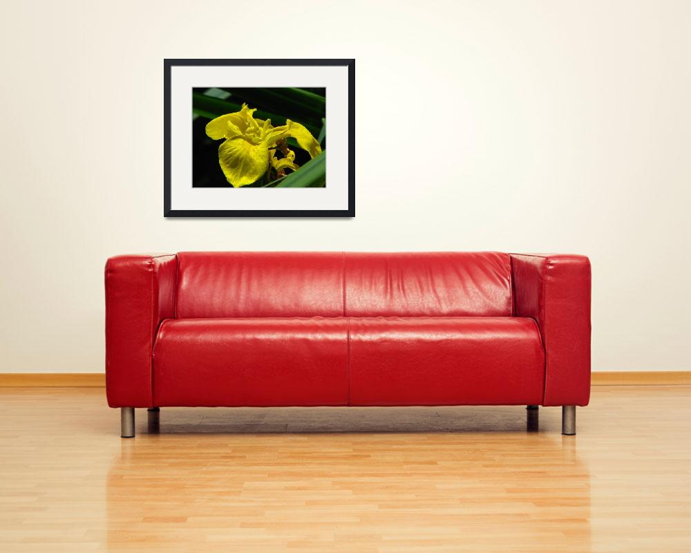 """Yellow Lily - IMG_6387""  (2010) by davies"