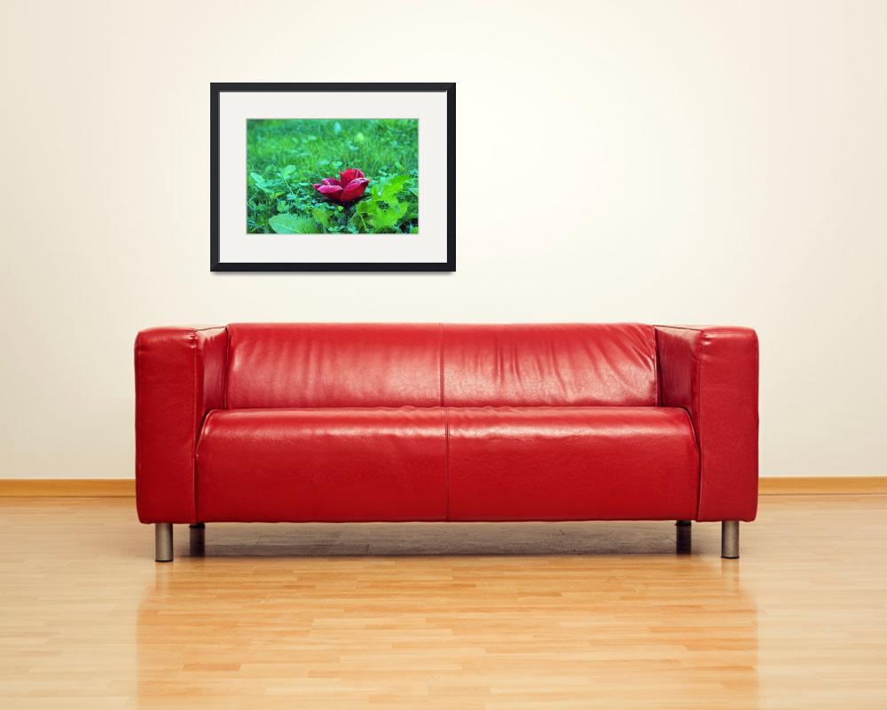 """""""a rose among weeds""""  (2011) by paco125as"""