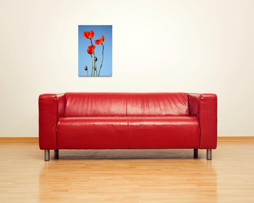 """Poppies in the Sun 7967""  (2011) by rayjacque"
