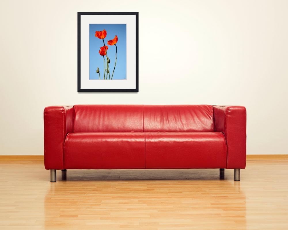 """""""Poppies in the Sun 7967""""  (2011) by rayjacque"""