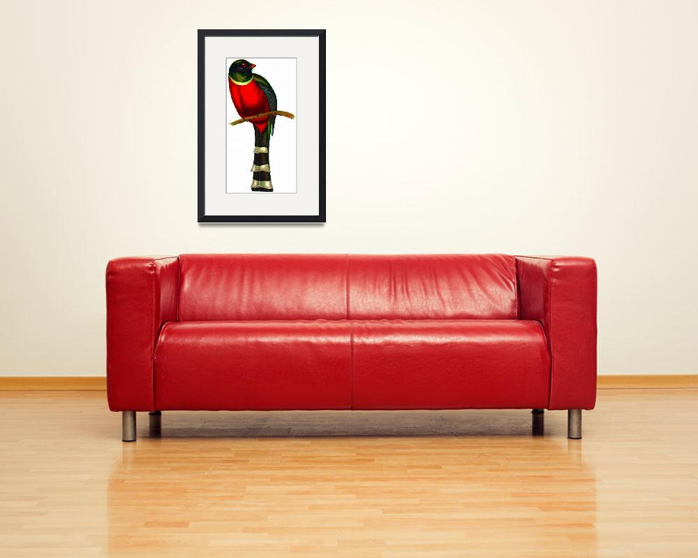 """Mountain Trogon (Trogon mexicanus)&quot  (2009) by markkumurto"