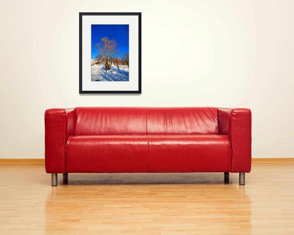 """""""Solitude&quot  (2011) by Freezeframe"""