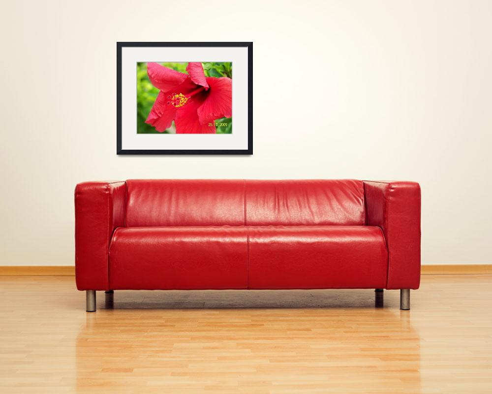 """""""Red Hibiscus""""  (2009) by tahoenpa"""
