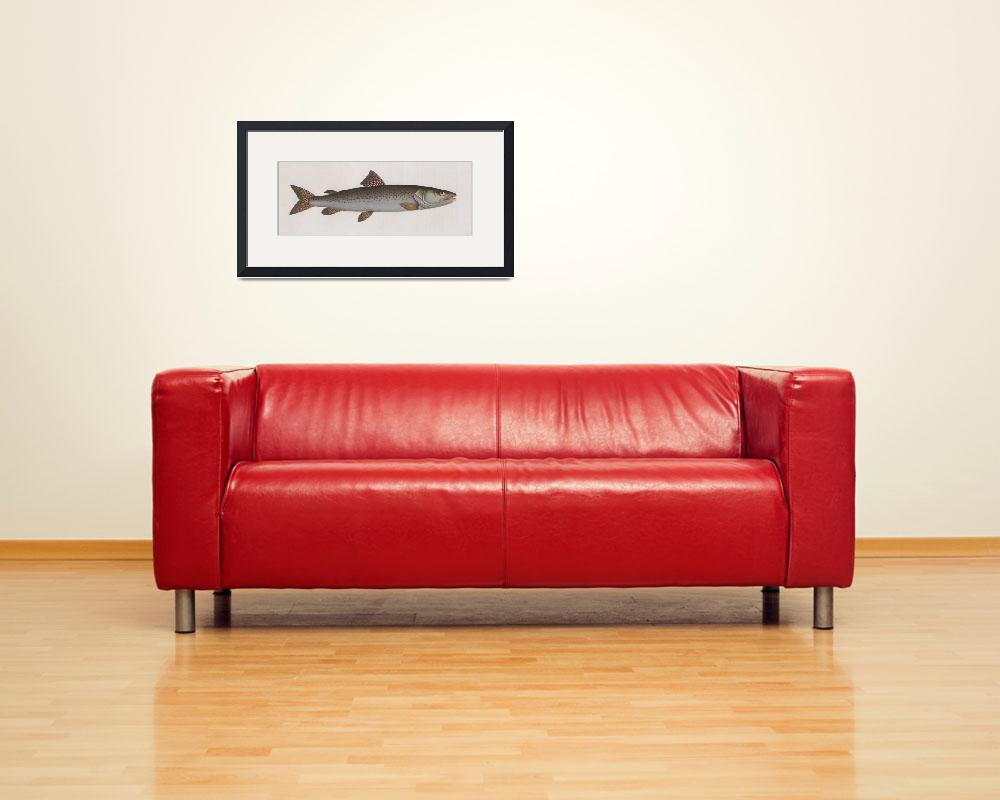 """Vintage Illustration of a River Salmon (1785)""  by Alleycatshirts"