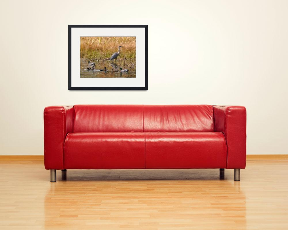 """""""Ducks and Blue Heron New Durham NH&quot  (2012) by bavosiphotoart"""