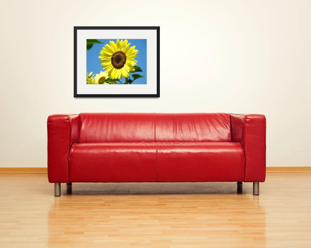 """SUN FLOWERS Art Prints Yellow Sunflower Floral&quot  (2009) by BasleeTroutman"