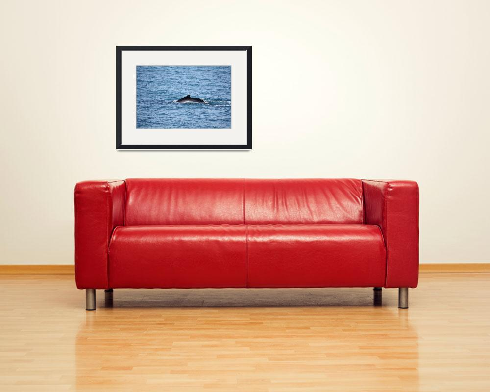 """""""NaP_ Whale Watching003&quot  by nevilleprosser"""