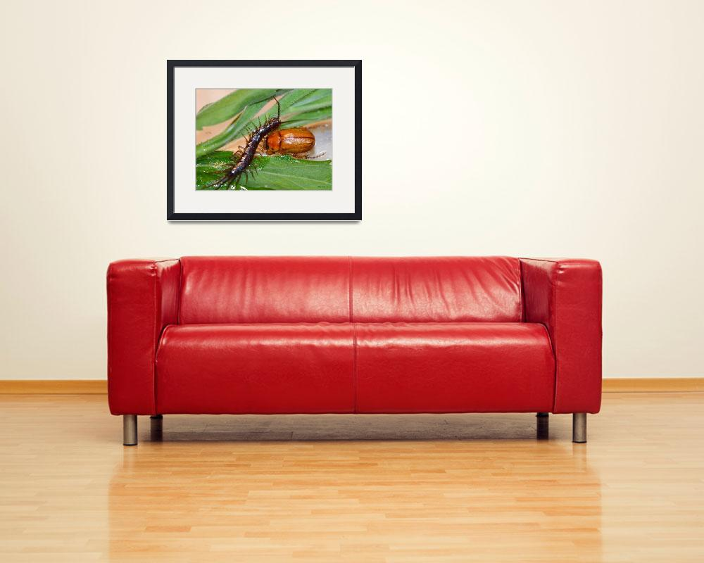 """""""Centipede and June Bug""""  (2012) by theblueplanet"""