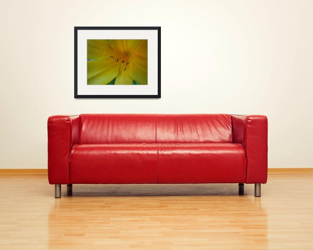 """""""Yellow Lily&quot  (2008) by alisonwest"""