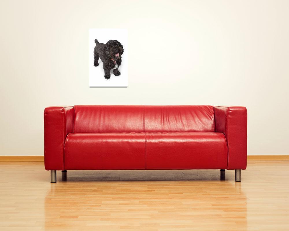 """""""Black Bichon-Cocker Spaniel Dog""""  by DesignPics"""