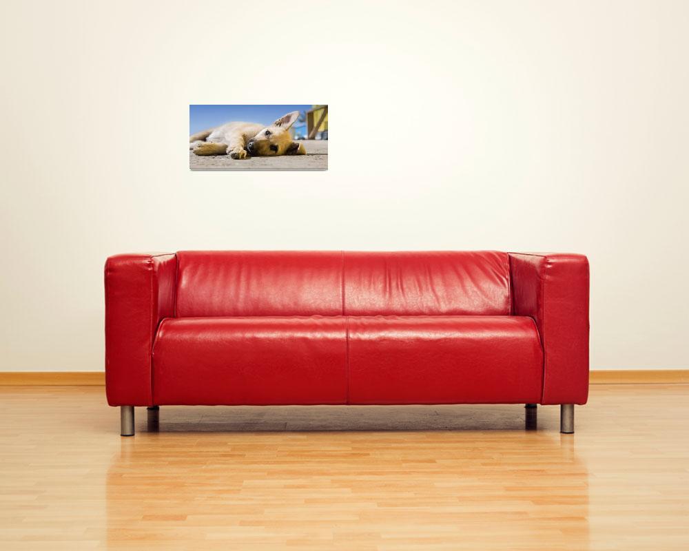 """631 Art Dog Framed Photo&quot  by eddiealfaro"