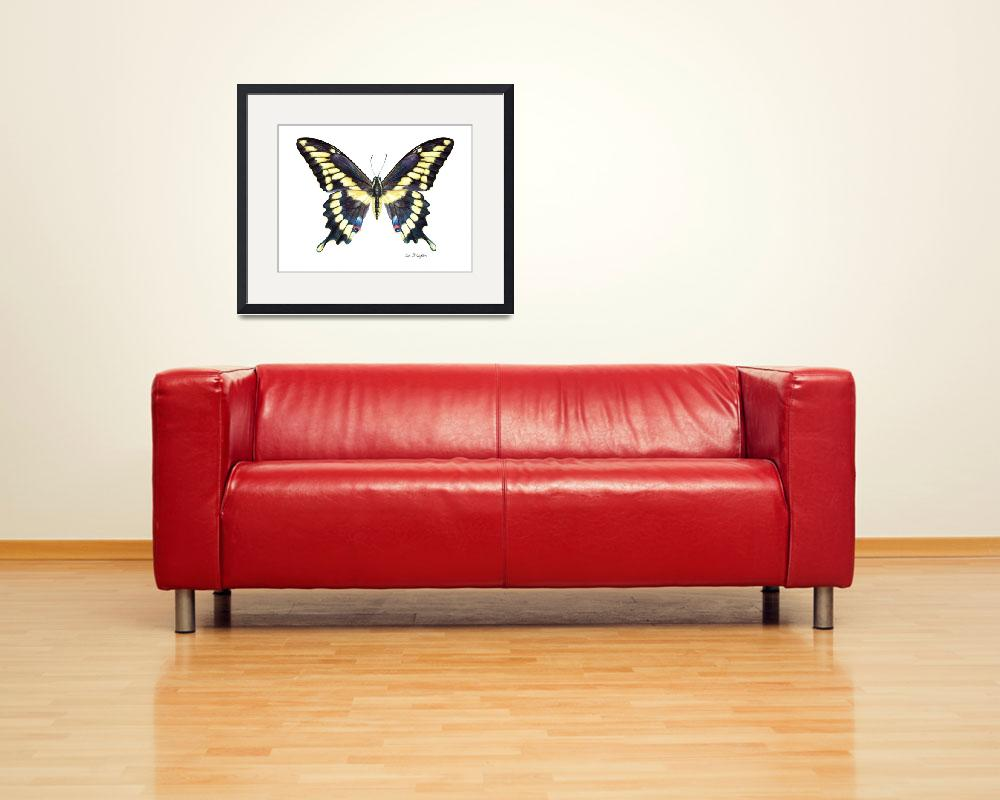 """""""Giant Swallowtail&quot  (2008) by LisaMclaughlin"""