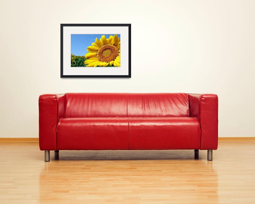 """""""Sunshine On My Shoulder&quot  (2011) by bettynorthcutt"""