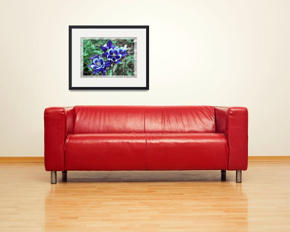 """Blue Columbine Wildflowers&quot  (2008) by EagleEyesDesign"