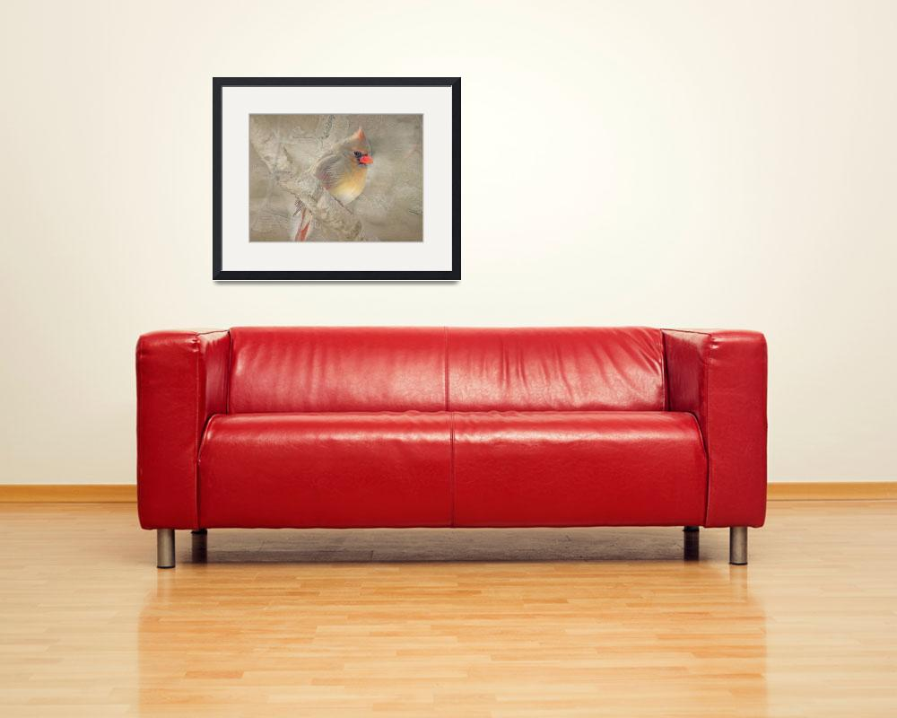 """""""Female Northern Cardinal&quot  (2010) by BarbaraZuz"""